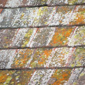 nettoyage toiture quimper